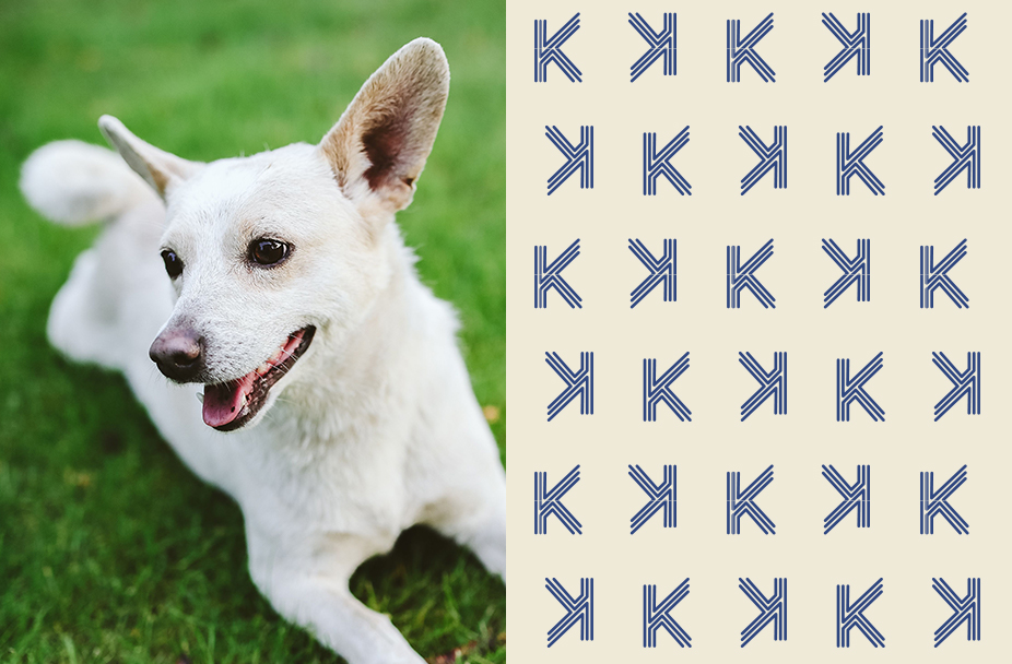Small white dog laying on green grass, text box with repeating pattern of Kendrick capital